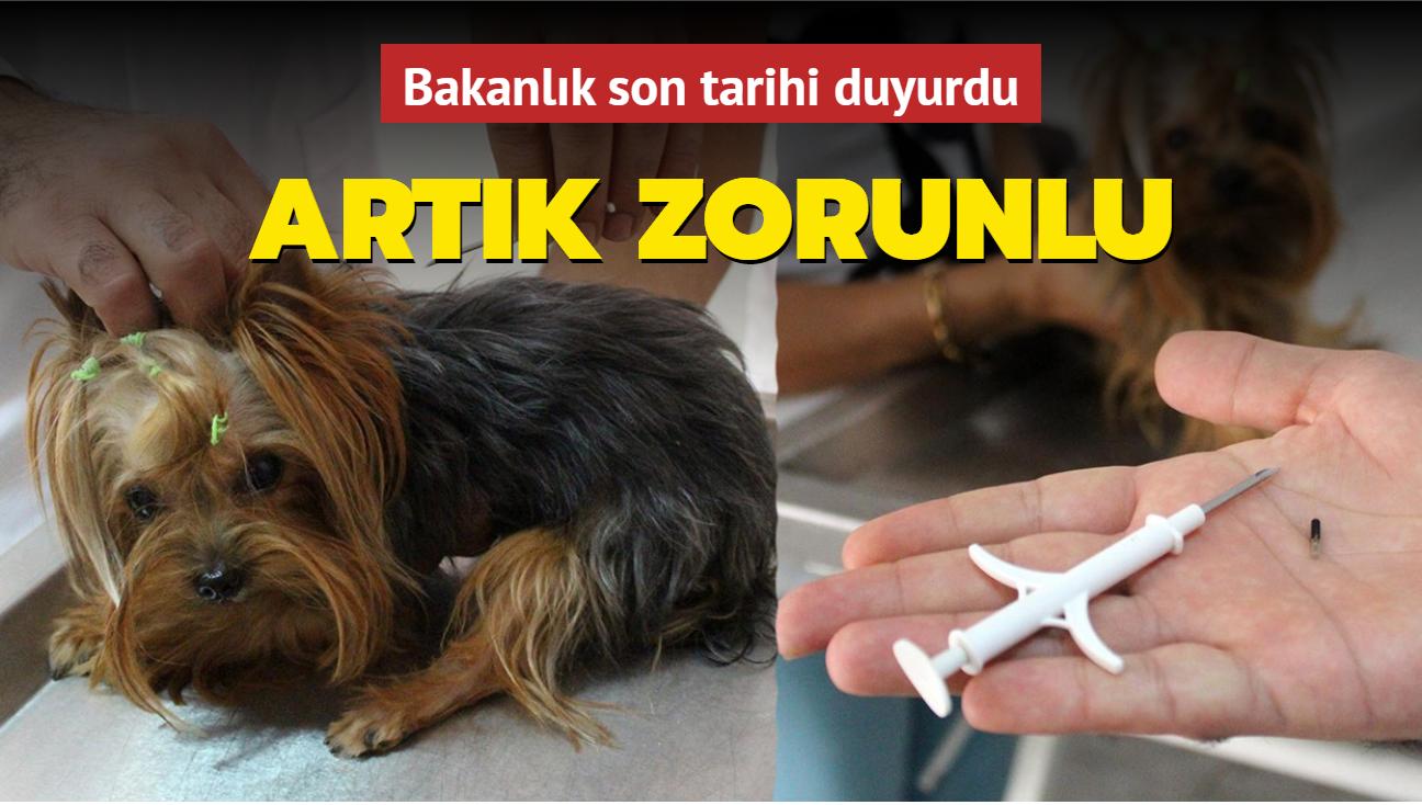 Evcil hayvanlara çip takılması zorunlu olacak