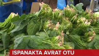 <p><span style='font-size: 1.6rem;'>İstanbul 'da ki pazarcılar böyle  söylüyor. Sebebi Giresun da bi
