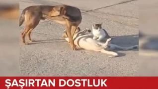 <p>İki köpek ve bir kedinin şaşırtan  dostluğu cep telefonu kamerasına yansıdı. Halk arasında 'kedi