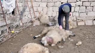 <p><span style='font-size: 1.6rem;'>Kurtlar koyun sürüsüne saldırdı. O  anlar güvenlik kamerasına ya