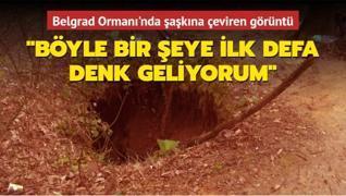 Belgrad Ormanı'nda şaşkına çeviren görüntü: Böyle bir şeye ilk defa denk geliyorum