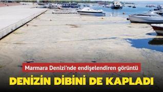 Marmara Denizi'nin dibi de deniz salyasıyla kaplandı