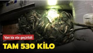 Kaçak avlandığı tespit edilen 530 kilo inci kefali Van'da ele geçirildi