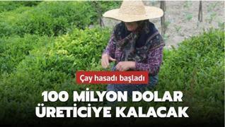 Çay hasadında 100 milyon dolar üreticinin cebinde kalacak