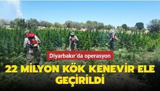 Jandarma 22 milyon kök kenevir ele geçirdi