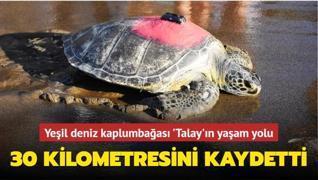 Uydudan izlenen deniz kaplumbağası 'Talay'ın yaşam savaşı... 30 kilometresini kaydetti