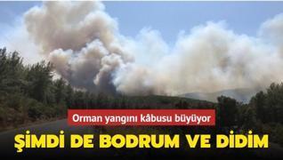 Bodrum ve Didim'de orman yangını çıktı