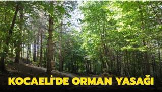Kocaeli Valisi açıkladı: Ormanlık alanlara girmek yasak