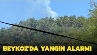 Beykoz'da yangın alarmı