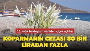 11 aylık bekleyişin yeniden çiçek açtılar... Koparmanın cezası 80 bin liradan fazla