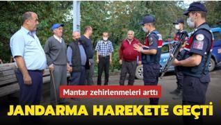 Mantar zehirlenmeleri arttı... Jandarma harekete geçti