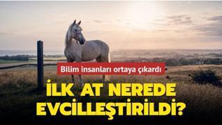 Bilim insanları ortaya çıkardı: İlk at nerede evcilleştirildi?
