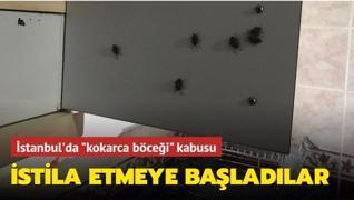 İstanbul'da 'kokarca böceği' kabusu... İstila etmeye başladılar