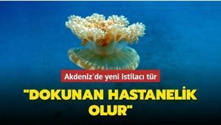 Akdeniz'de 'yakıcı denizanası' istilası... 'Hastanelik olabilirsiniz'