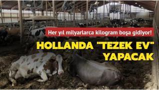 Hollanda boşa giden inek gübresini konut inşaatında kullanmayı planlıyor