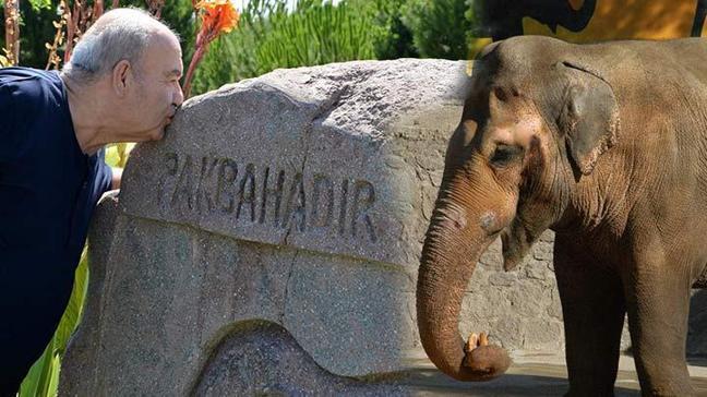 Fil bakıcısı, ölen filin yanına gömülmek istedi