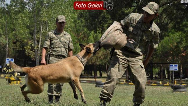 Bomba avcısı köpeklerden nefes kesen gösteri