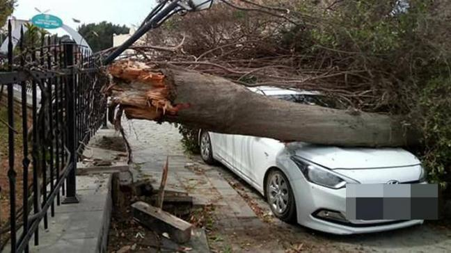 Mersin´de fırtınada ağaçlar devrildi; araçlar zarar gördü
