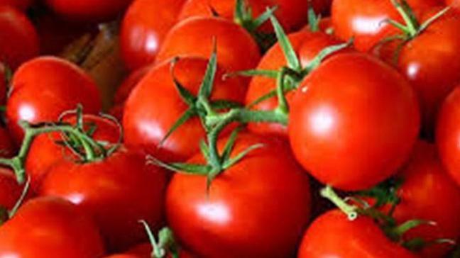 Rusya'dan 2 Türk şirkete daha domates ihracat izni çıktı
