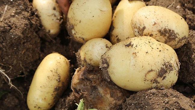 'Soğan ve patateste makul seviyeyi göreceğiz'