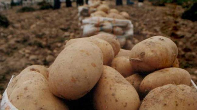 'Patates ve soğan fiyatları, 15-20 gün içerisinde 1- 1,5 lira seviyelerine inecek'