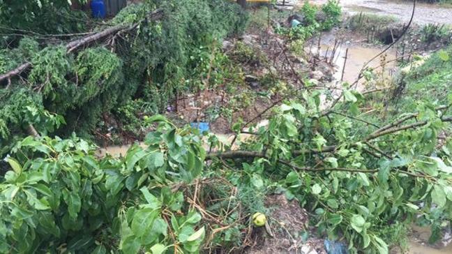 Bilecik'te dolu yağışı bahçe ve tarlalara zarar verdi