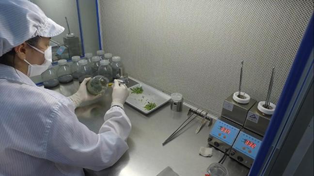Yalova'da kurulan orkide üretim tesisi ithalatı durdurdu