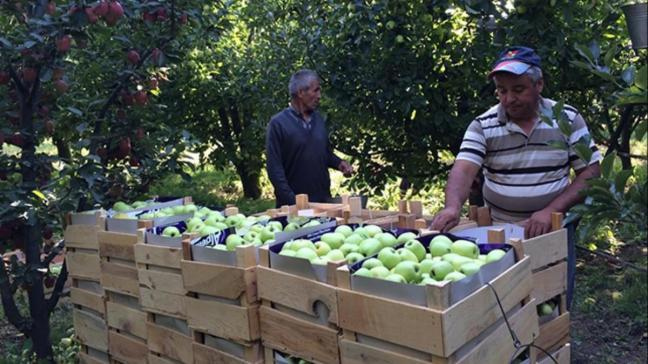 Cumhurbaşkanı Erdoğan talimat verdi, Isparta elması tanzimi başladı