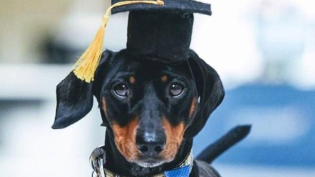 İngiltere'de ilk kez bir üniversite, terapi köpeğini işe aldı