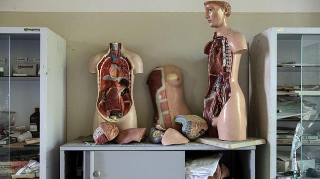 Hayran kalacaksınız: Anatomi