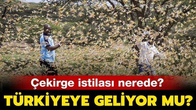 """Çekirge istilası Türkiye'ye geliyor mu"""" Çekirge istilası nerede, son durum nedir"""""""