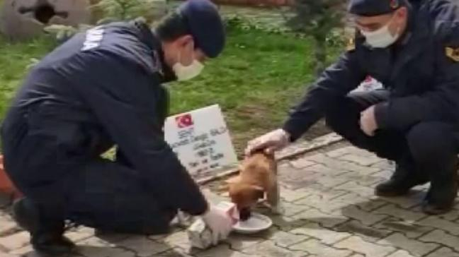 Jandarma, yavru köpeği önce kurtardı, sonra bakıma aldı