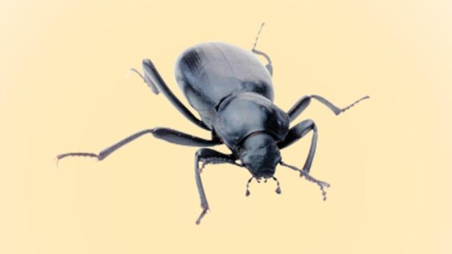 Böcek istilası kapıda!