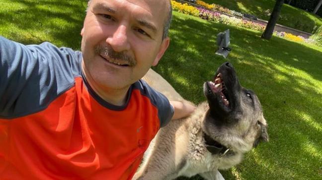 İçişleri Bakanı Süleyman Soylu, sahiplendiği sokak köpeklerinin fotoğraflarını paylaştı