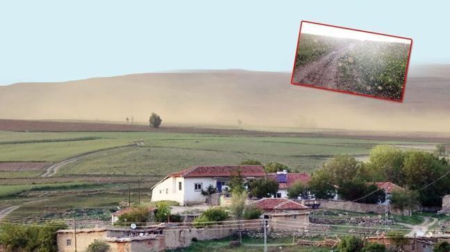 Yozgat'ta sinek istilası
