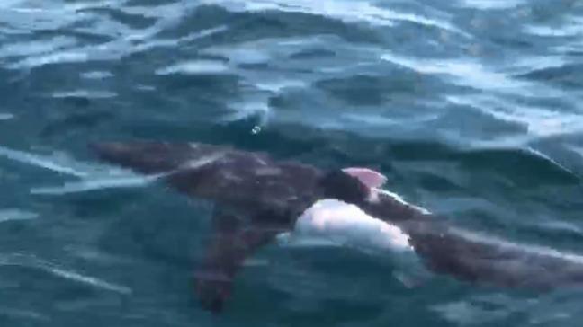 Saros Körfezi'nde köpek balığı görüntülendi
