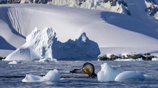 Antarktika'da bulundu! 68 milyon yıllık fosil yumurta bir mosazora ait olabilir