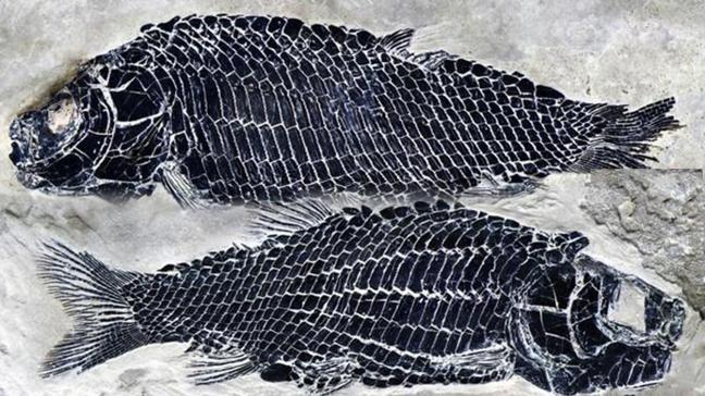 Çin'de 244 milyon yıl öncesine ait balık fosili bulundu