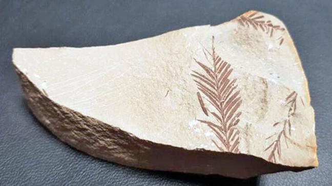 Bu fosil 65 milyon yaşında