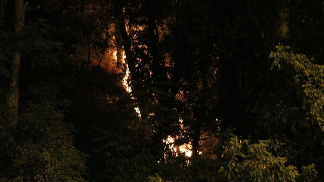 Emirgan Korusu'nda çıkan yangın söndürüldü