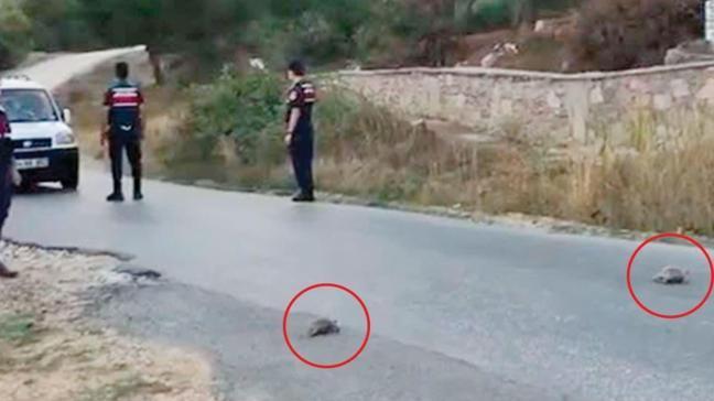 Kaplumbağa ailesi için trafik durdu