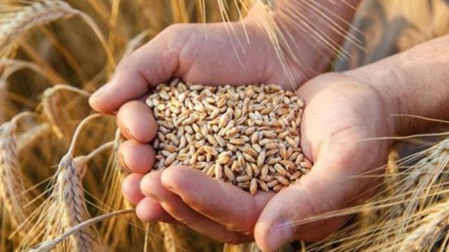 Buğday, arpa ve mısır ithalatında gümrük vergisi 1 Ocak'a kadar sıfırlandı