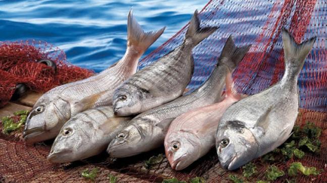 Salgın engel olamadı: Su ürünleri sektöründe tarihi ihracat rekoru