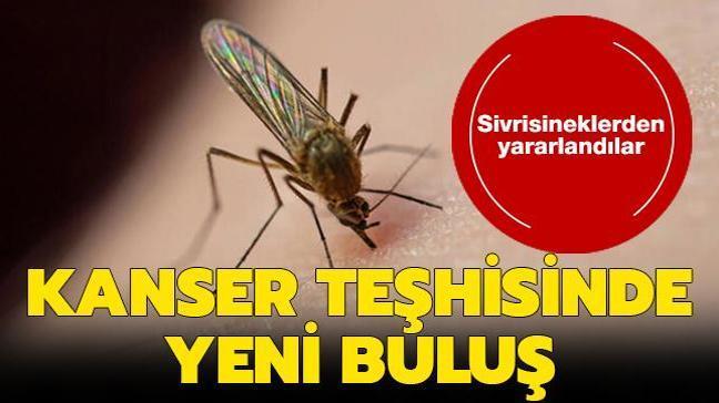 Kanser teşhisinde yeni buluş: Sivrisineklerden yararlandılar