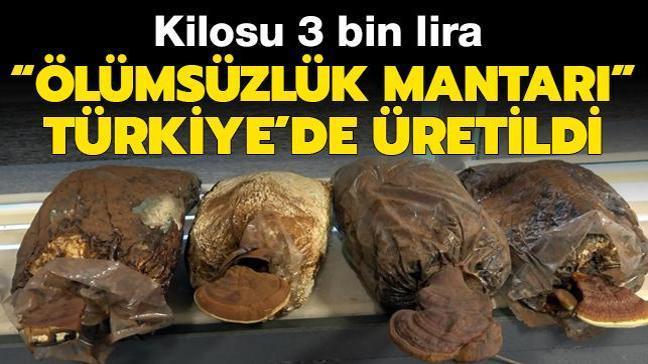Türkiye'de ölümsüzlük mantarı üretildi! Kilosu 3 bin lira