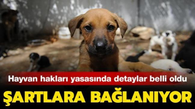 Hayvan hakları yasasında detaylar belli oldu: Şartlara bağlanıyor...