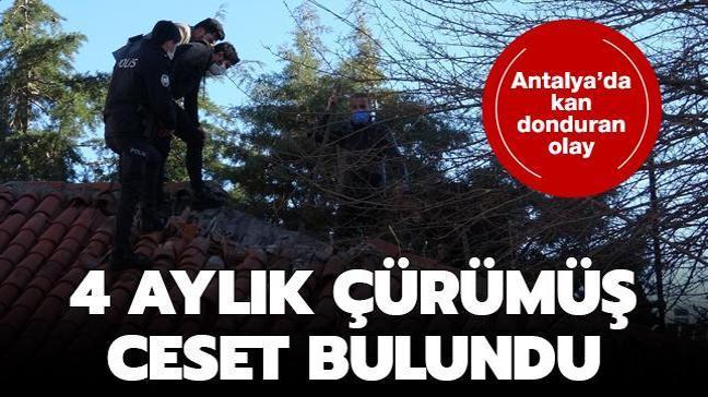 Antalya'da kan donduran olay: 4 aylık çürümüş ceset bulundu