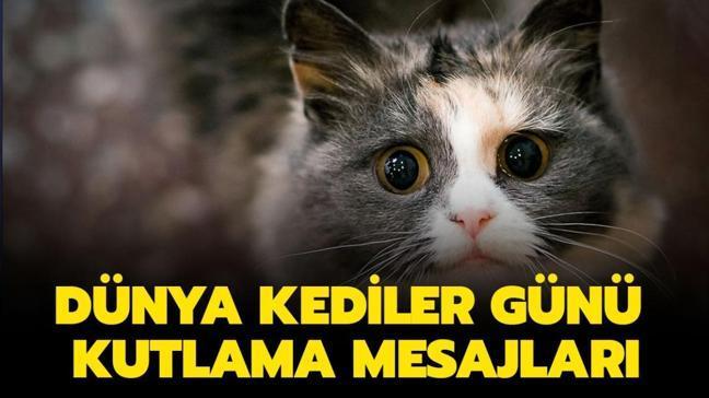 Dünya Kediler Günü kutlama sözleri ve mesajları! En güzel Dünya Kediler Günü mesajları sizlerle!