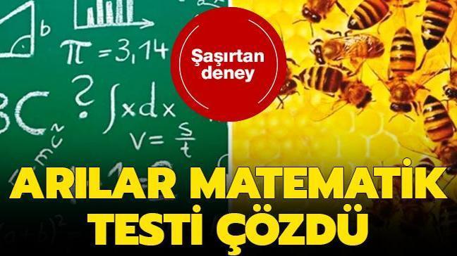 Arılar sayıları anlamadan matematik testi çözüyor