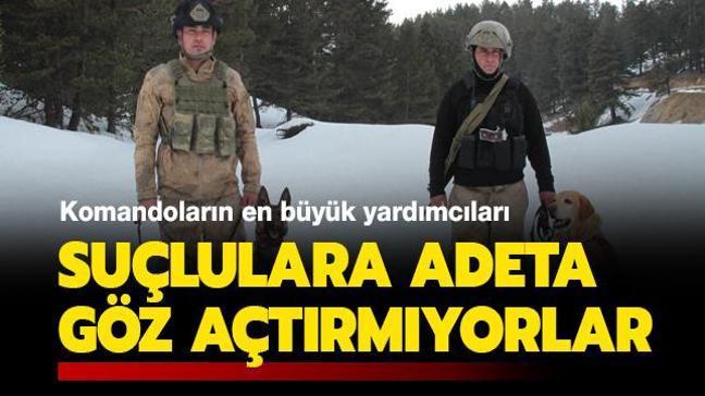 Komandoların en büyük yardımcıları... Tatya ve Hızar suçlulara adeta göz açtırmıyor